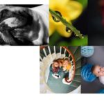 creative photos type writer dog , flowers babey and children